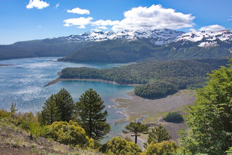 Vista de los araucarias, del lago y de las montañas cubiertos con nieve fotos de archivo