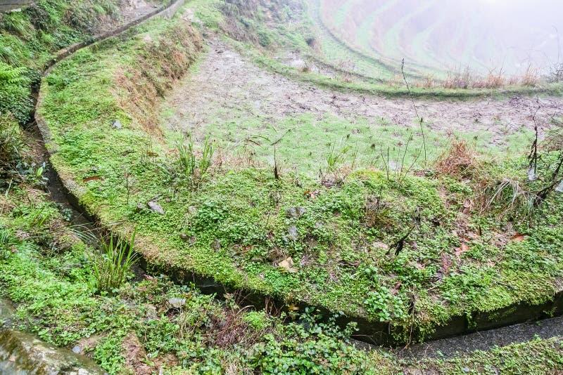 vista de los fieilds colgantes del arroz mojado imágenes de archivo libres de regalías