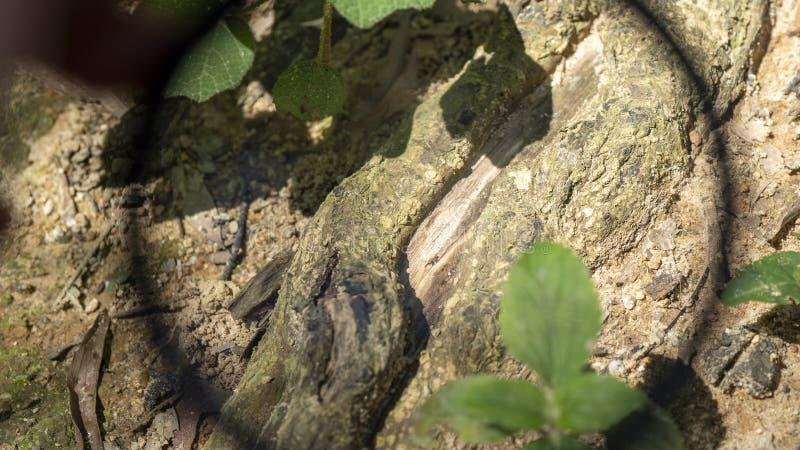 Vista de los troncos viejos a través del círculo negro imágenes de archivo libres de regalías