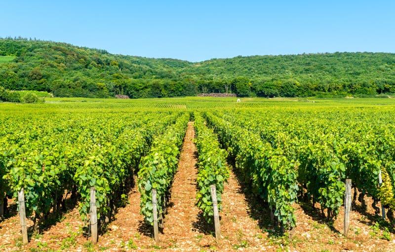 Vista de los viñedos de Cote de Nuits en Borgoña, Francia foto de archivo