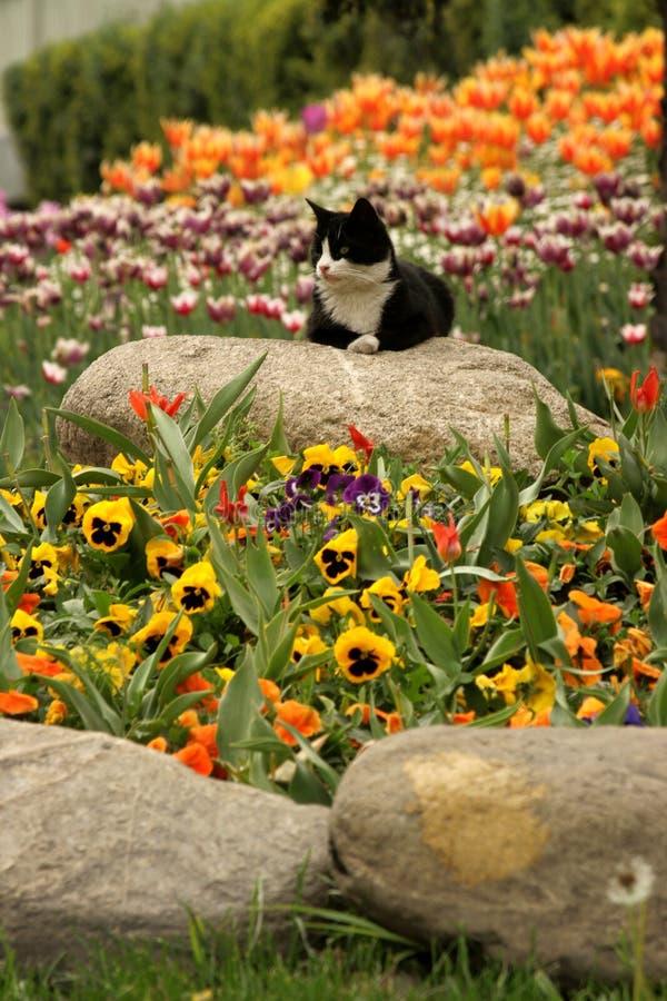 Vista de muitas tulipas coloridas pelo gato no Parque Gulhane, no Festival de Tulipas de Istambul imagens de stock royalty free