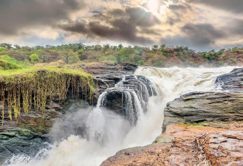 Vista de Murchison Falls no parque nacional do rio de Victoria Nile fotografia de stock