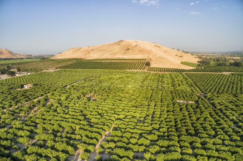 Vista de negligência das árvores alaranjadas na angra do limão, EUA fotos de stock