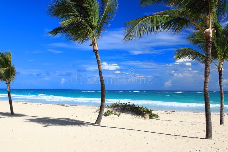 Vista de palmeiras sós e da praia branca da areia em Punta Cana, República Dominicana imagem de stock royalty free