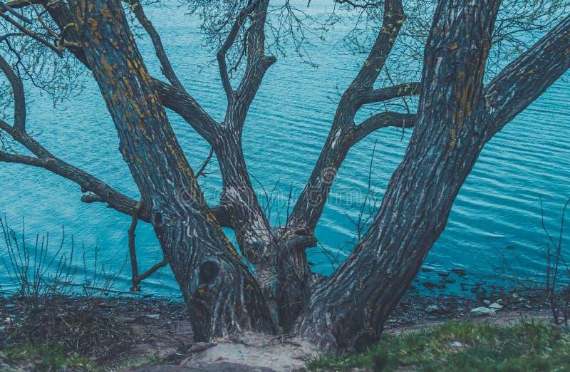 Vista de refrescamento do lago largo com água azul rochoso da costa e do espaço livre Ponte sobre o rio Árvores perto da água imagem de stock royalty free
