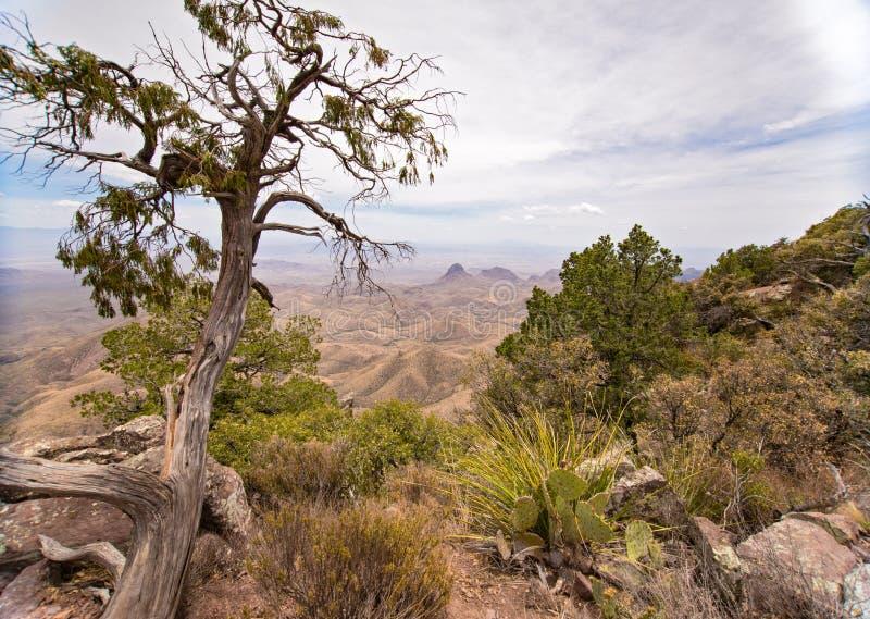 Vista de Rim Trail sul no parque nacional de curvatura grande fotos de stock royalty free