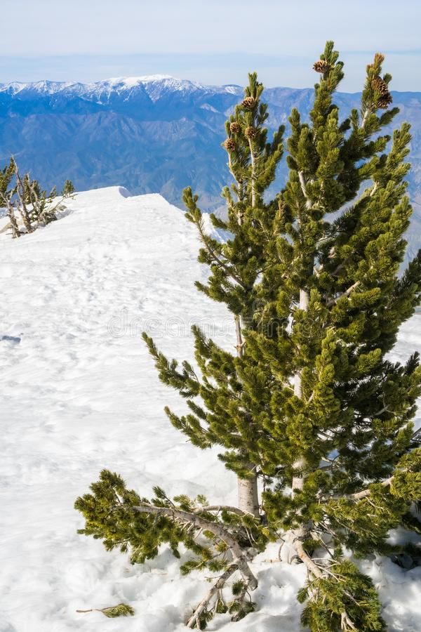 Vista de San Jacinto Peak para a montanha de San Gorgonio, San Bernardino National Forest, Califórnia foto de stock