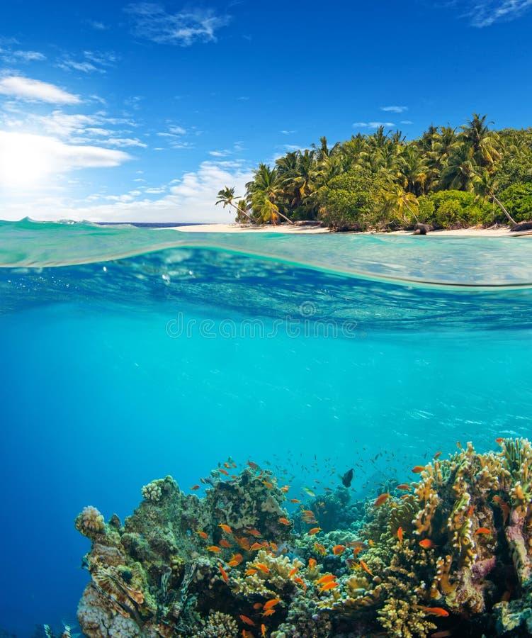 Vista de superfície inferior e à superfície da àgua do recife de corais fotos de stock royalty free