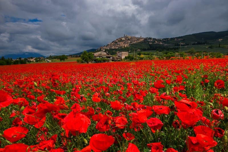 Vista de surpresa da vila medieval do Trevi com um campo de papoilas vermelhas em Úmbria, Itália foto de stock royalty free