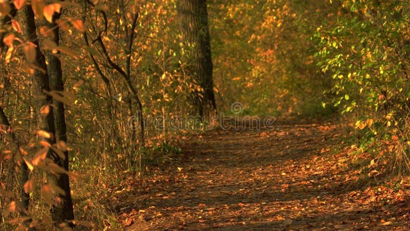 Vista de surpresa na floresta outonal com luz solar imagens de stock