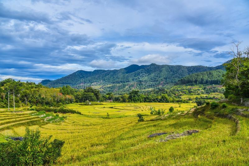 Vista de surpresa sobre os campos do arroz em Sumatra em Indonésia fotografia de stock royalty free