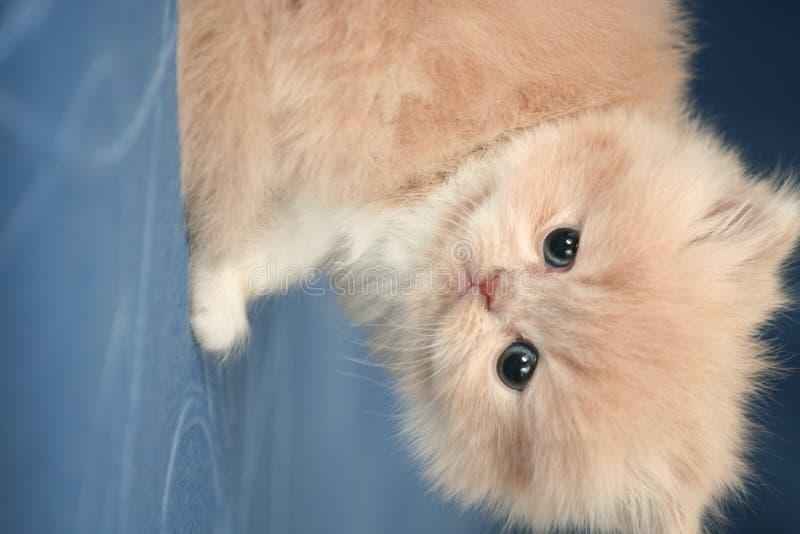Vista de um gatinho macio agradável pequeno foto de stock