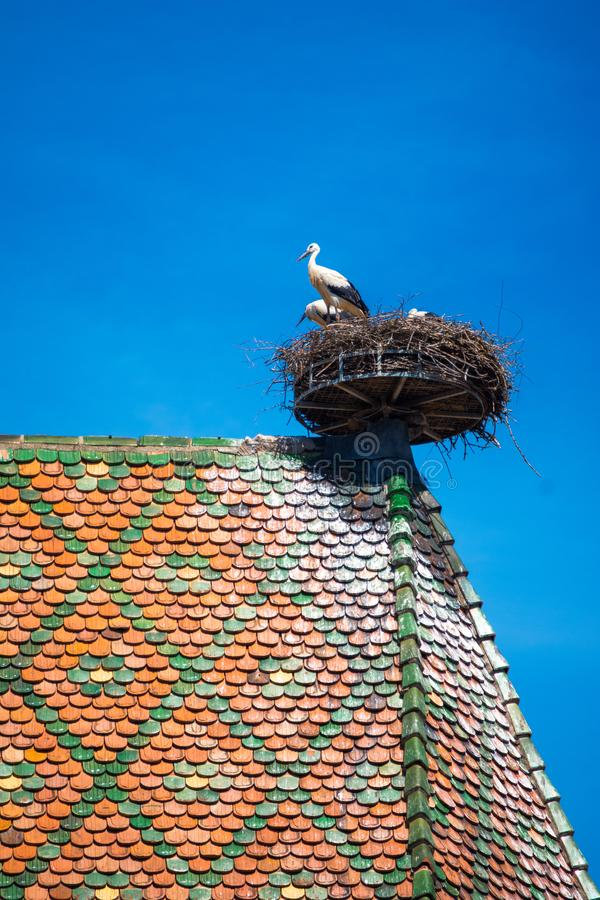 Vista de um ninho com cegonhas, símbolo da cidade histórica de Colmar, igualmente conhecida como pouca Veneza, Colmar, Alsácia fotos de stock