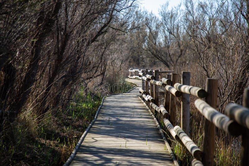 Vista de um trajeto e de uma cerca de madeira com árvores despidas fotos de stock