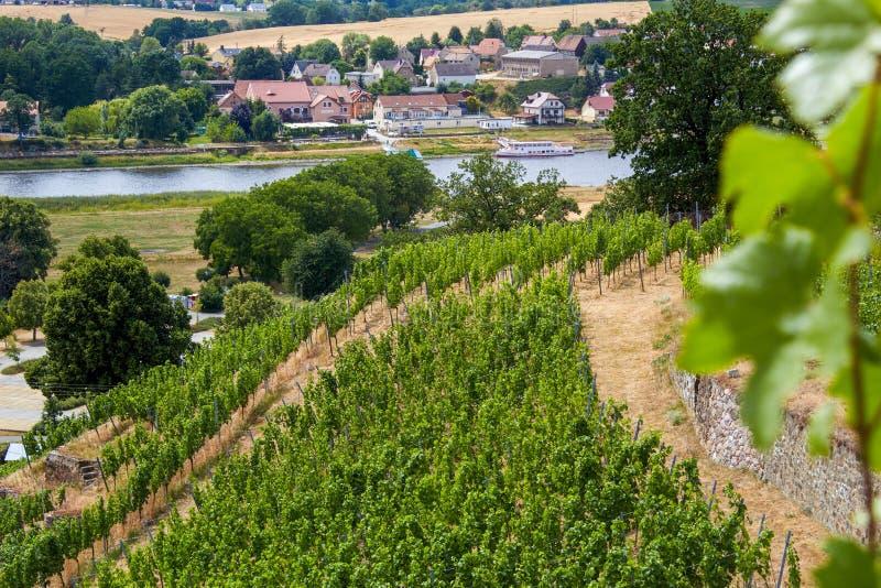 Vista de um vinhedo saxão no Elbe fotografia de stock
