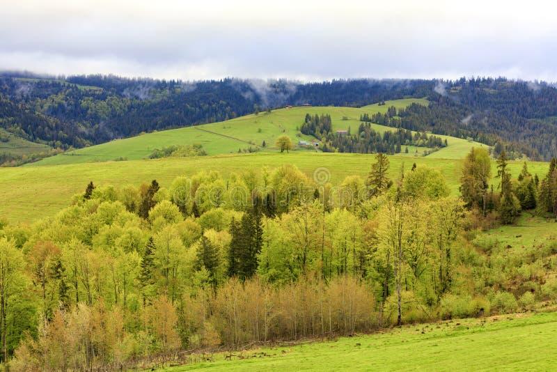 Vista de uma altura na vila e na mola Carpathians cobertos de vegetação com as árvores de folhas mortas novas fotografia de stock
