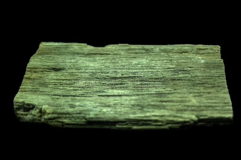 Vista de uma madeira hirto de medo, isolada no fundo preto fotografia de stock