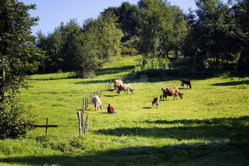 Vista de uma mulher tradicional, de vacas e de árvores imagens de stock royalty free