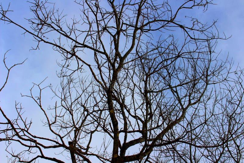 Vista de un árbol en invierno fotos de archivo