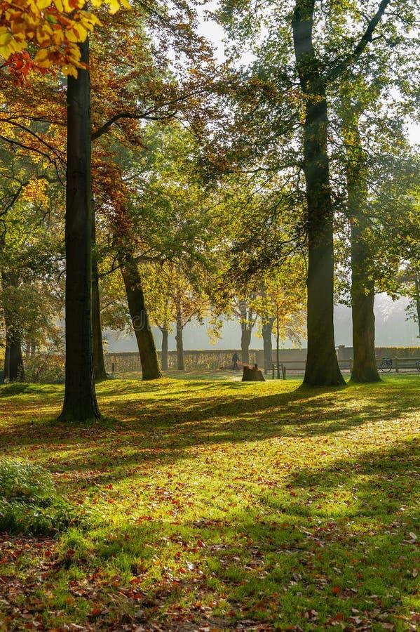 Vista de un camino a través de los árboles de un bosque hermoso y colorido en otoño Las hojas rojo-se teñen, en el árbol y encend fotografía de archivo libre de regalías