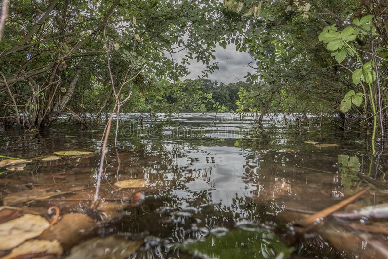 Vista de un lago en el medio de mucha vegetación verde que refleja en el agua imagen de archivo