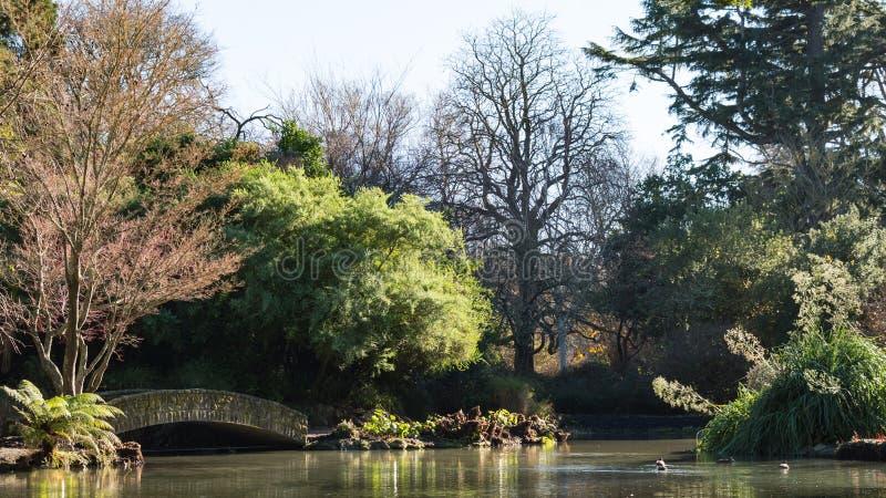 Vista de un lago, patos, puente viejo, estación del otoño foto de archivo