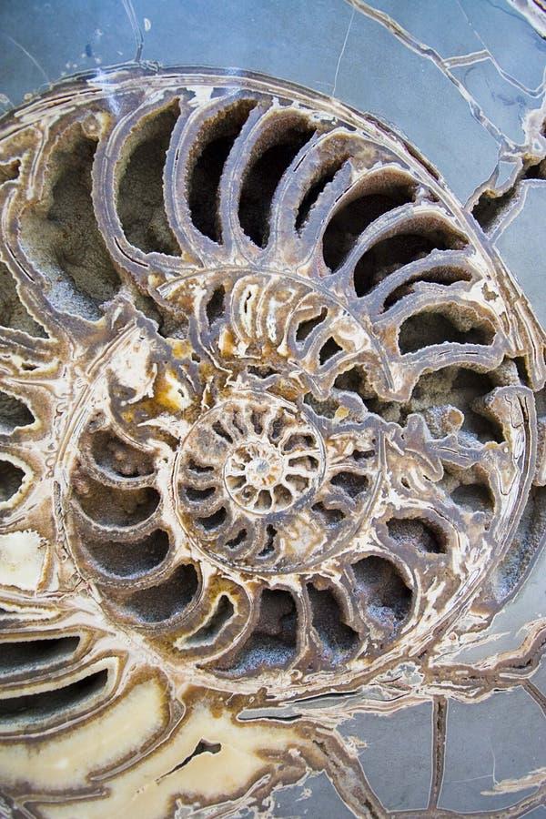vista de un shell del nautilus imágenes de archivo libres de regalías