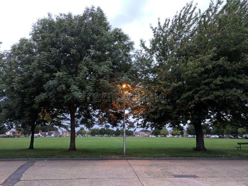Vista de un sol brillante a través de ramas de árbol imagen de archivo