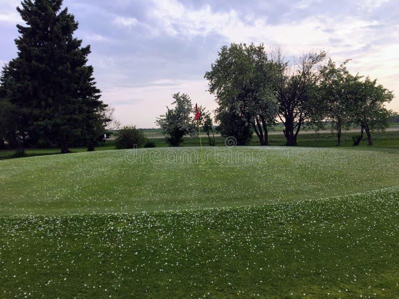 Vista de un verde del golf cubierto en pétalos de la flor de un árbol fotografía de archivo libre de regalías