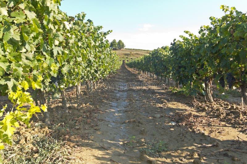 Vista de un wineyard en La Rioja, España imagen de archivo libre de regalías