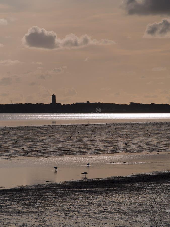 Vista de una marea marina con pájaros de la cuchara foto de archivo