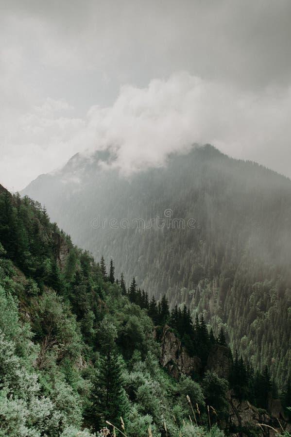 Vista de una montaña boscosa foto de archivo libre de regalías