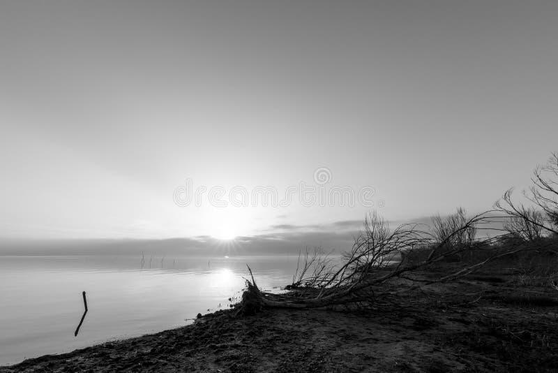 Vista de una orilla del lago en la salida del sol, con los árboles esqueléticos, sol bajo encendido fotografía de archivo