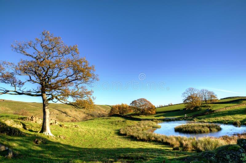 Vista de una pequeña charca con los árboles imagen de archivo libre de regalías