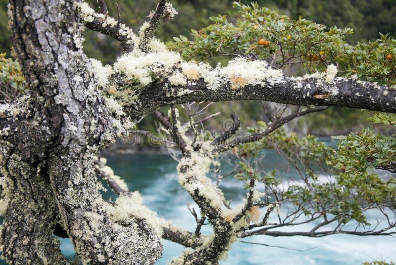 Vista de Vicente Perez Rosales National Park - Chile imágenes de archivo libres de regalías