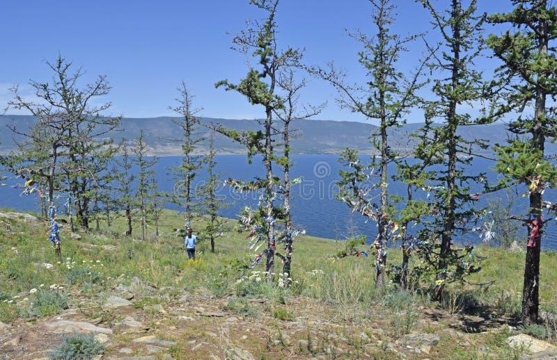 Download Vista Degli Alberi E Del Lago Baikal Sull'isola Fotografia Stock - Immagine di rilievo, colline: 117975124