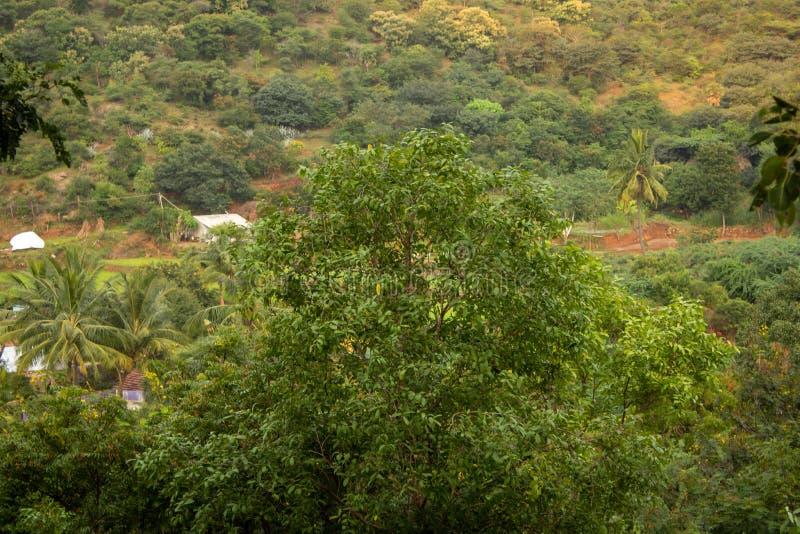 Vista degli alberi e della piccola comunità del villaggio nei pressi di una collinetta, Salem, Tamil Nadu, India fotografia stock libera da diritti