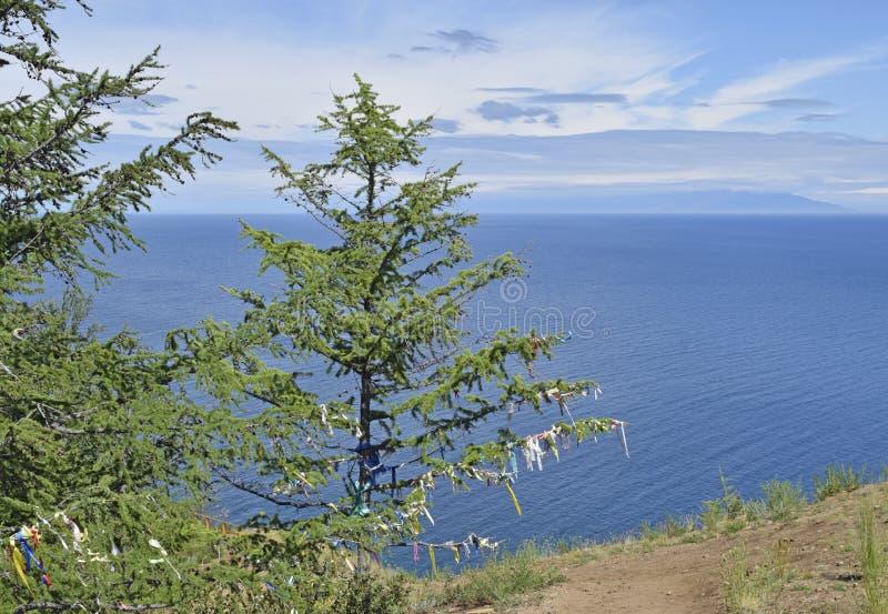 Download Vista Degli Alberi Sui Precedenti Del Lago Baikal Blu Fotografia Stock - Immagine di esterno, aria: 117975088