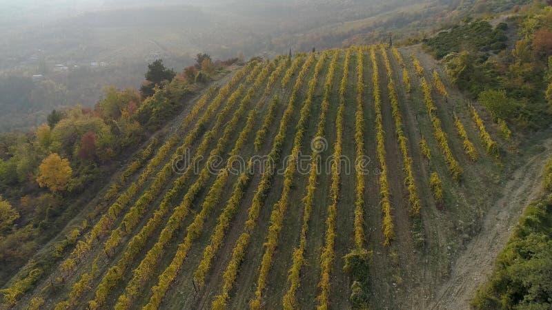 Vista dei campi della piantagione con gli alberi in nebbia sulla collina colpo Vista fantastica di foschia sopra la montagna diet immagini stock