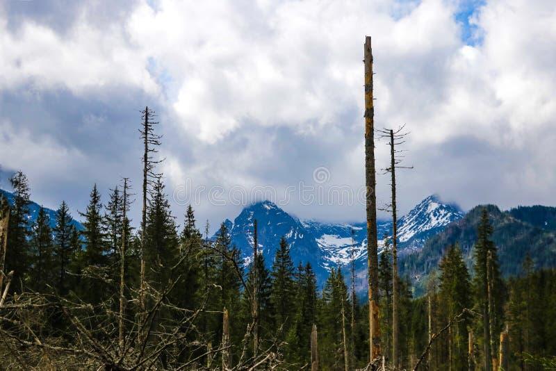Vista dei mounains di Tatra Montagne di Tatra di mattina immagine stock libera da diritti