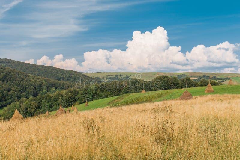 Vista dei mucchi di fieno rurali fotografia stock libera da diritti