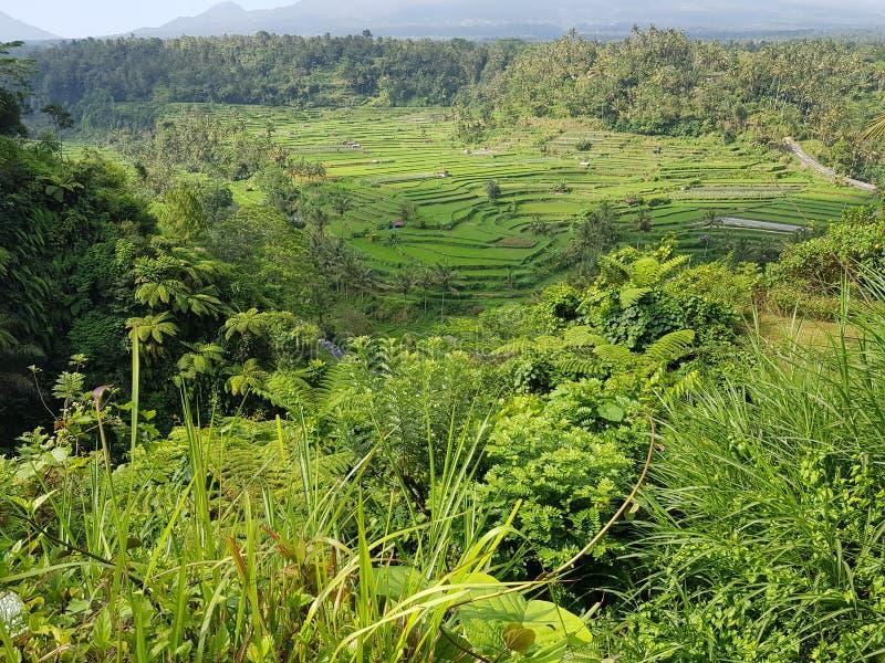 Vista dei terrazzi del riso fotografie stock