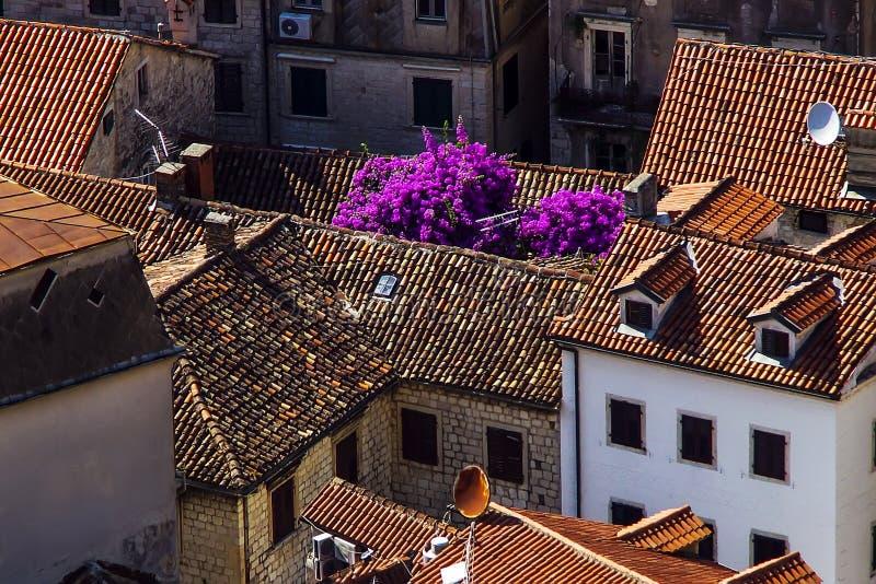 Vista dei tetti del mattone rosso e di bei cespugli sboccianti fotografia stock