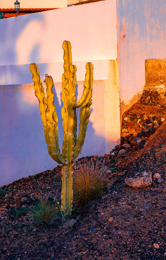 Vista dei tipi differenti di cactus sulla costa dei las Americhe, Tenerife, isole Canarie, Spagna di Playa de fotografie stock libere da diritti