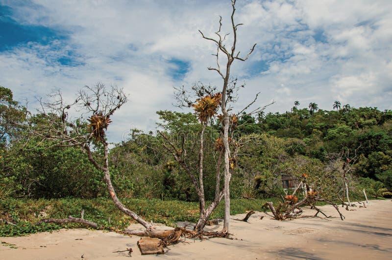 Vista dei tronchi e della vegetazione di legno nella sabbia il giorno nuvoloso in Paraty Mirim fotografie stock