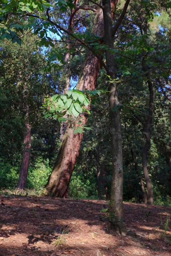 Vista del árbol en el parque fotos de archivo