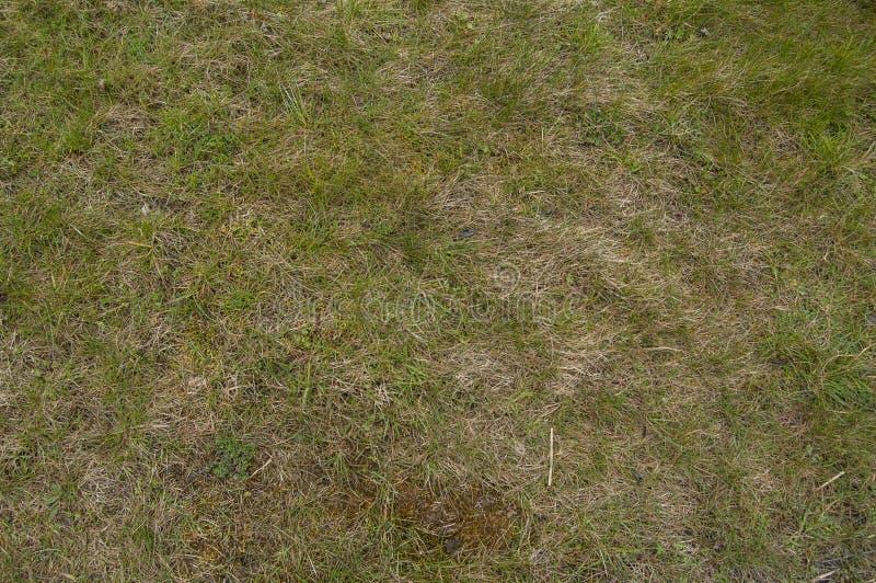 Vista del birdseye di struttura del fondo dell'erba fotografia stock libera da diritti