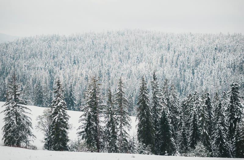 Vista del bosque nevado desde arriba Paisaje del invierno Cerca de Zakopane fotografía de archivo
