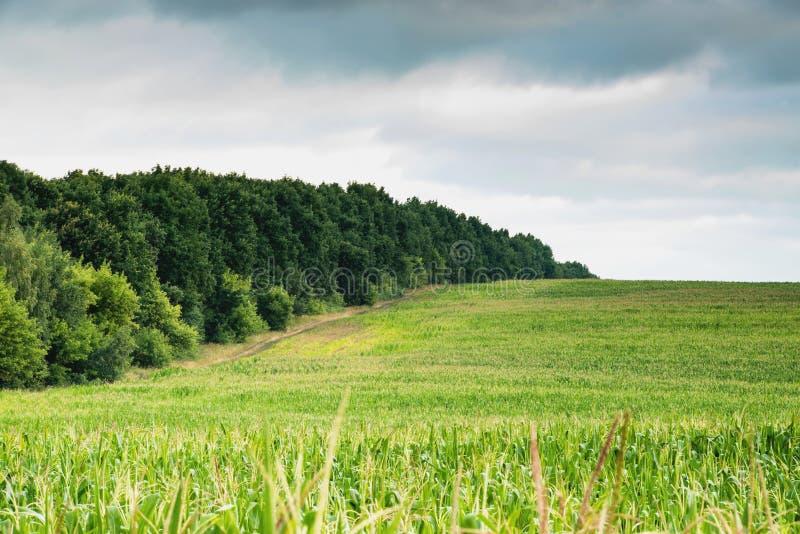 Vista del campo di grano fotografia stock libera da diritti