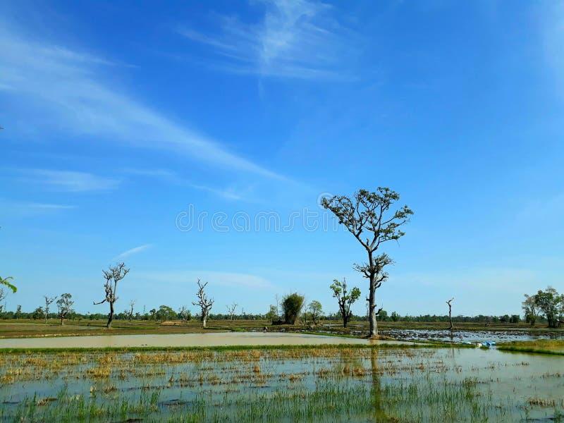 Vista del campo en Tailandia imágenes de archivo libres de regalías